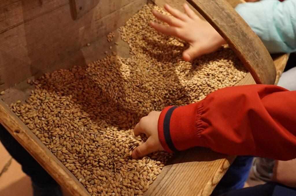 fattoria_didattica_risone_bambini_riso_melotti